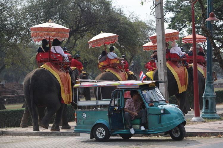 People riding on elephants