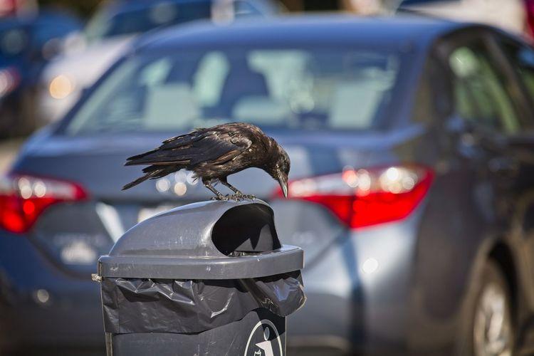 Close-up of a bird on a car