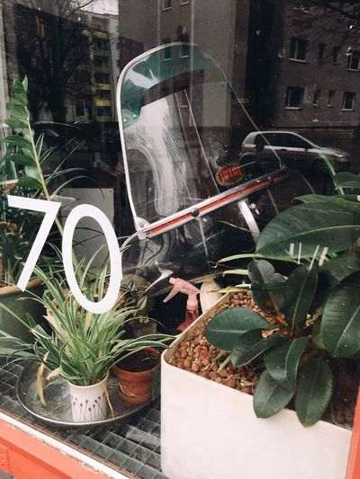 Close-up of potted plants on glass window