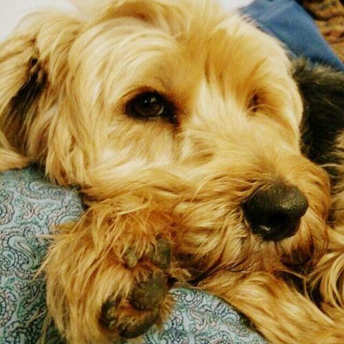 Dog❤ Dog Love I Love My Dog My Dog You Dog Spring Dog Suprise Dog Hallo World Dog My Beautiful Dog