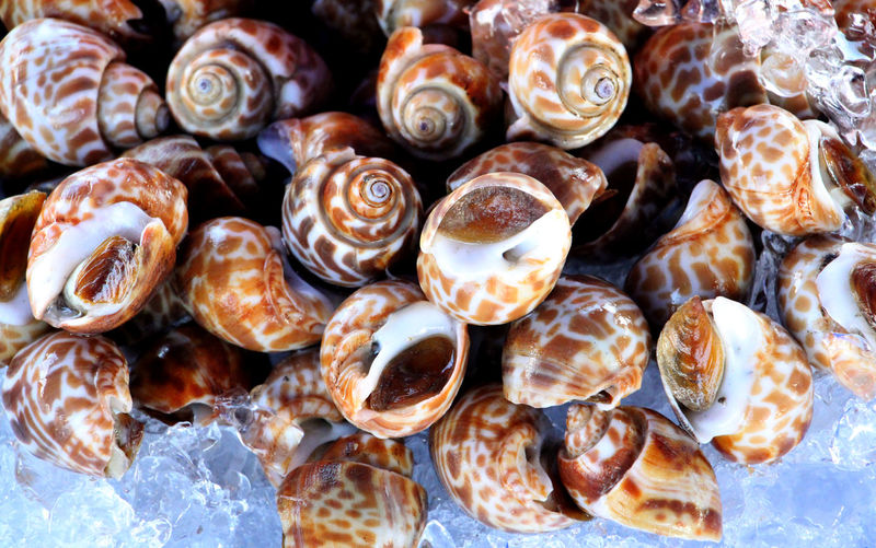Colorful shellfish is Seafood in Thailand. Ice Sea Food Market Market Fish Holiday Summer Health Healthcare Healthy Food Thai Thailand Living Lifestyle Lifestyle People Business Seashell Animal Shell Close-up Shell Squid Crustacean Gastropod Snail Mussel Oyster  Mollusk Clam Scallop Fish Market Frozen Lake