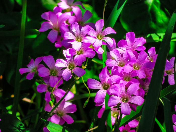 Spring flowers Wild Flowers Wildflower Wild Flowers Flower Head Flower Petal Close-up Plant Green Color Blooming In Bloom