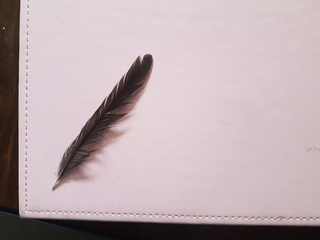Poser Quill... Pink Notebook Dark Colour Feather  Stitched Negative Space | EyeEm Selects Studio Shot No People Paper Close-up Indoors  White Background Ink Fragility Day | The Still Life Photographer - 2018 EyeEm Awards