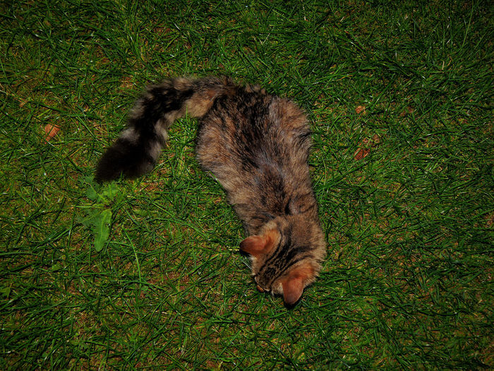 My cat is enjoying the night outside like me! Cat Cats From Above  Grass Green Color Nature Night Outdoors Purzel