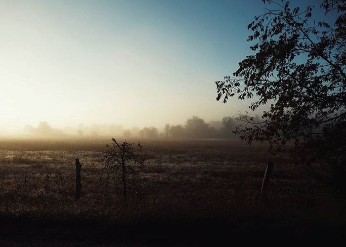 Sunrise fog.