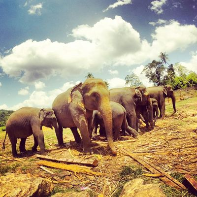 Animal Animal Themes Animals In The Wild Cloud - Sky Day Elephant Elephants Free Grass Indian Elephant Mammal Nature Nature Nature_collection No People Outdoors S Safari Animals Sky Sunlight Togetherness Travel Tree Vacations Wildlife