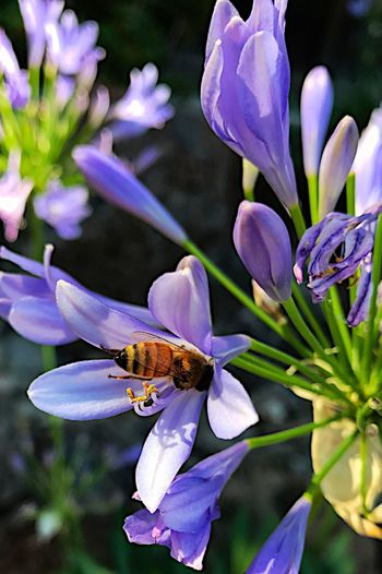 Flower Insect Petal One Animal Animal Themes Nature Beauty In Nature Fragility Animals In The Wild Plant Purple Flower Head Growth Outdoors Freshness No People Focus On Foreground Day Animal Wildlife Close-up Dive In Bee Honey Honey Bee Honey Maker
