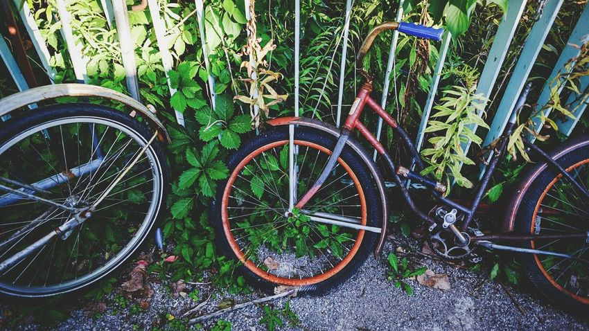 Mode Of Transport Land Vehicle Transportation Bicycle Stationary Plant Parking Parked Wheel Growth Cycle Outdoors Footpath Rusted Fujifilm_xseries FUJIFILM X-T1 Vintage Forgotten Once Loved