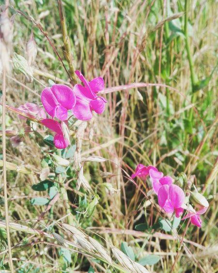 Nature Природа лето_в_городе Flower Blossom Petal Flowers Nature