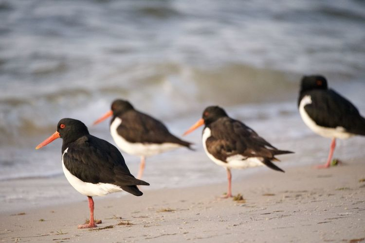 View of birds on beach