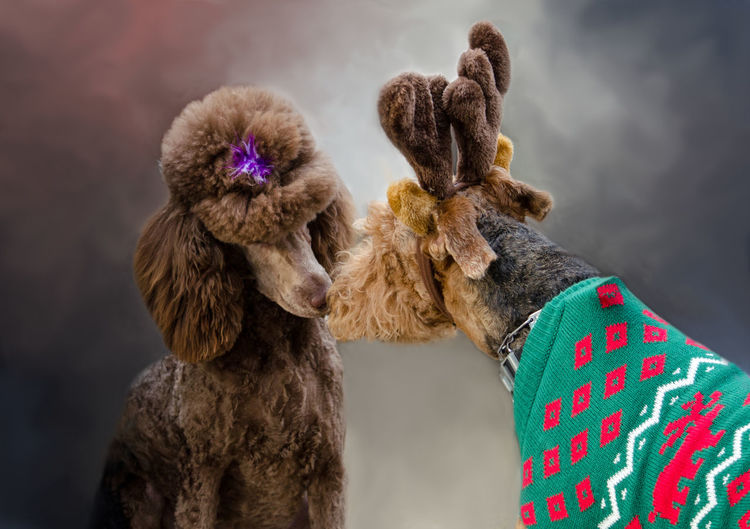 Close-up of dogs against sky
