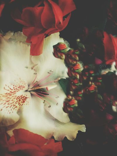 Multi Colored Flower Nature Fragility Indoors  Red Enjoying Life Love Admiring Nature's Beauty Smile Random Acts Of Photography Freshness Tranquility Supriseflowers SecretAdmirer Close-up Flower Head