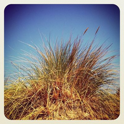 Again beautiful day here ☀☀ #weed #sea #beach #malahide #ebstyles_gf #earlybirdlove #bluesky #gf_ire #ireland #jj_forum #ubiquography Sea Beach Ireland Weed Bluesky Earlybirdlove Jj_forum Ubiquography Ebstyles_gf Malahide  Gf_ire