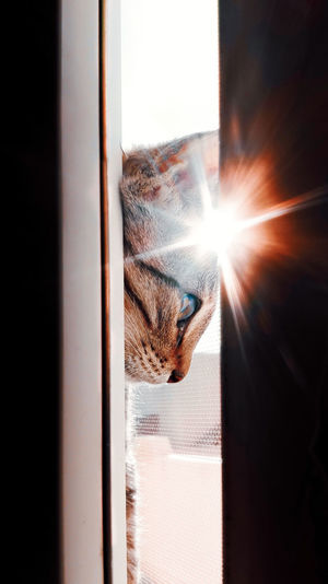 Sun flare and cat