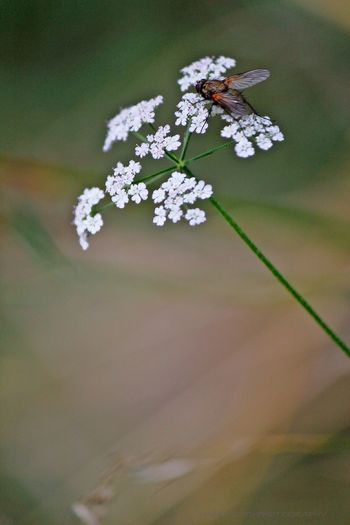THE CASTLE XI 'Alone' Tadaa Community EyeEm Nature Lover Nature Bokeh