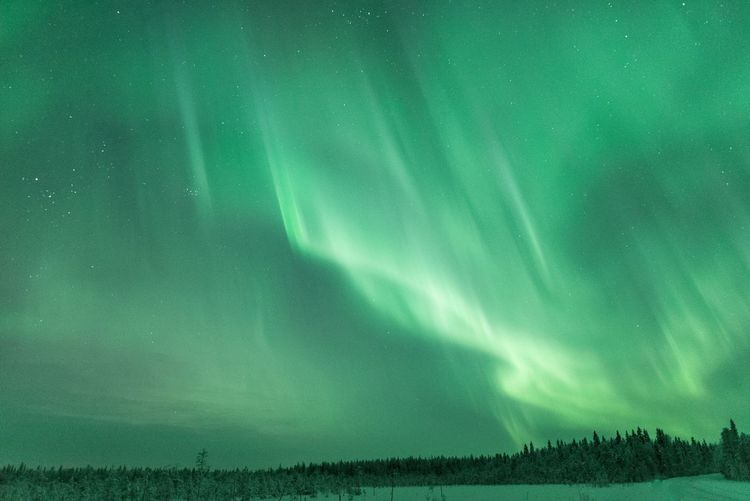 Arctic night in the wilderness Sky Tranquil Scene Night Tranquility Landscape Green Color No People Land Nature Star - Space Astronomy Northern Lights Aurora Borealis Forest Wilderness Travel Lapland Photography Freshness Scenics Hello World Outdoors EyeEm Nature Lover Winter Snow
