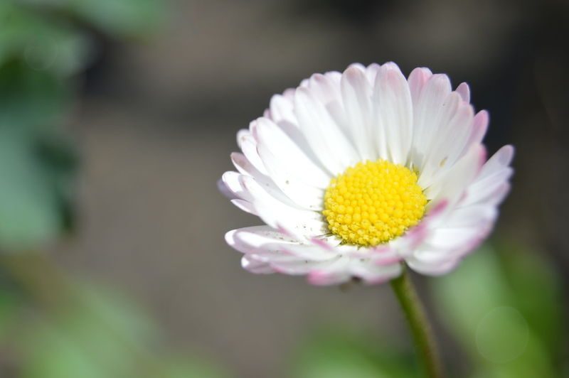 Flowers Flowers, Nature And Beauty Flower Photography White Flower Flowers,Plants & Garden Flowerphotography Beauty In Nature Nature White Flower Pink Flower Pink Flowers Flower Head Flower Yellow Petal Beauty Plant Daisy Flowering Plant