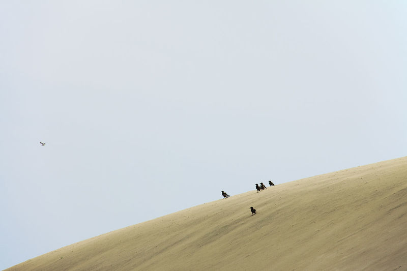 View of people on desert against clear sky