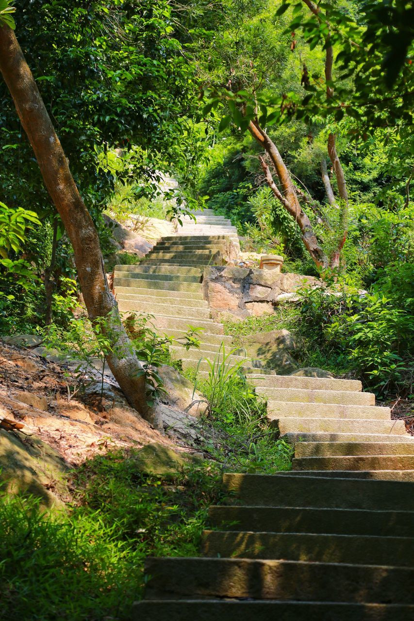 View Of Steps In Park