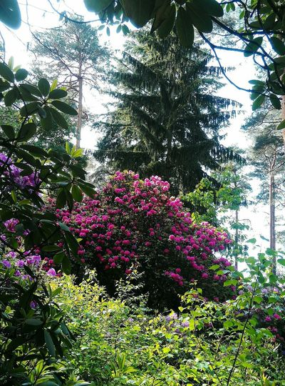 Kromlauer Parkansicht Rhododendrons In Wild Park Tree Branch Close-up Plant Sky Leaves Relaxing Moments