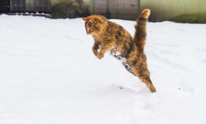 Cat Cat♡ Cat Lovers Cats