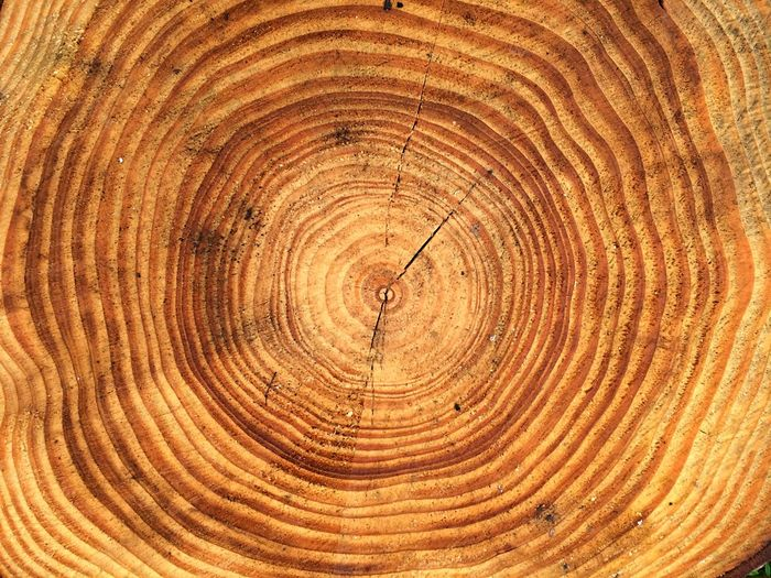 Annual Ring Close-up Tree Brown Pattern No People Tree Trunk Timber Nature Textured  Backgrounds Concentric Wood Grain Tree Stump Wood - Material Tree Ring Circle Full Frame Textures And Surfaces