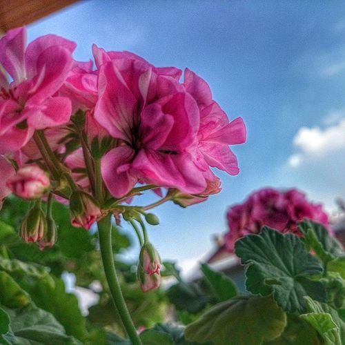 Hiç solmayacakmış gibi🌸Color Flowers Life BirazHDR