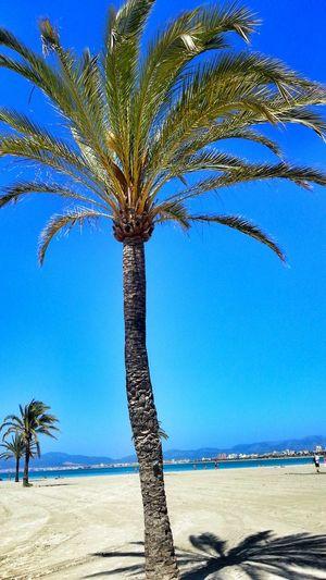 Beach Españoles Y Sus Fotos Somosfelices Mallorca