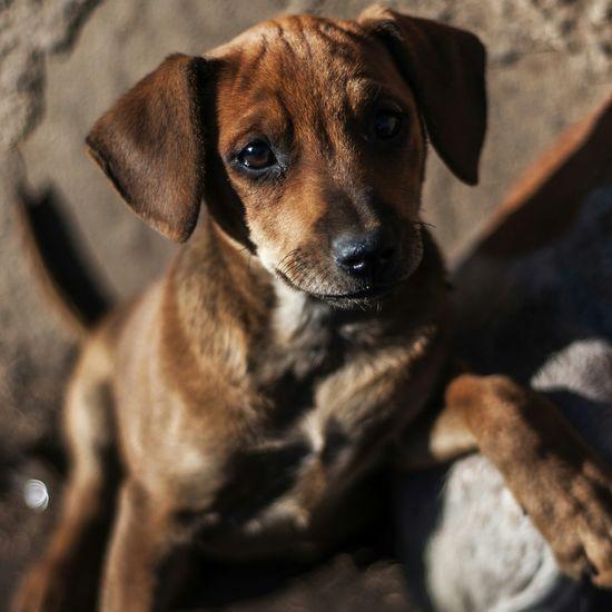 Photooftheday Dogs Puppy Street Dog Southafrica Nikon Pretoria CBD Puppies Streetphotography