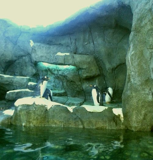 Penguins Calgary Zoo Waterscape