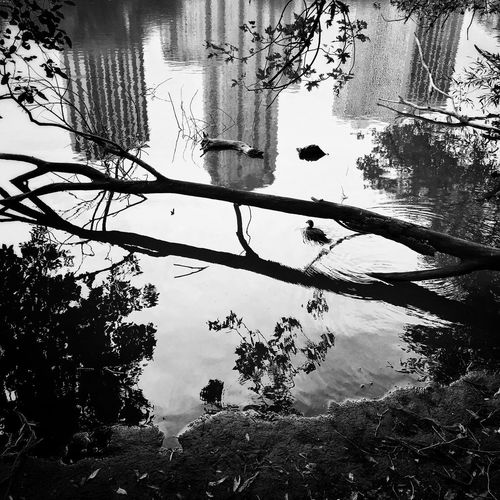 Reflection Chicago Blackandwhite Nature