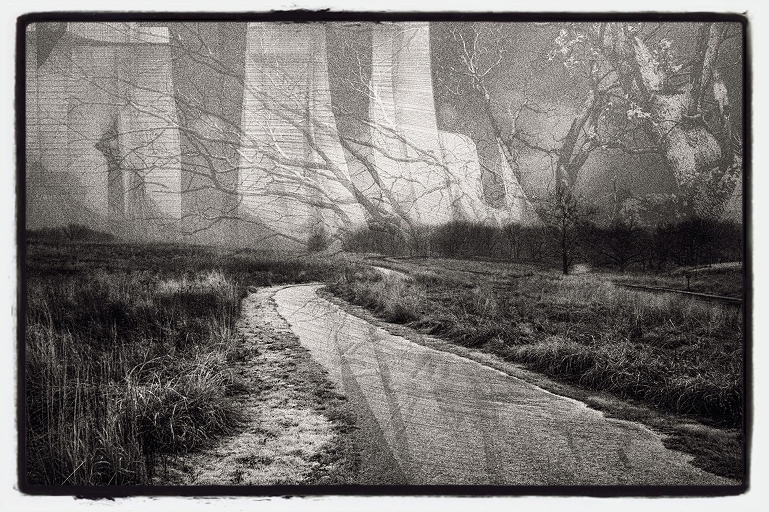transfer print, tree, auto post production filter, the way forward, tranquility, forest, nature, tranquil scene, dirt road, day, diminishing perspective, growth, bare tree, outdoors, non-urban scene, no people, landscape, scenics, beauty in nature, vanishing point