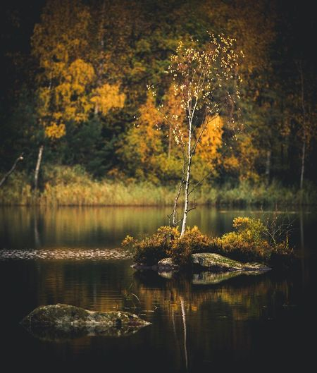 Standing Tall   Water Reflection Tree Lake Nature Growth No People Tranquility Tranquil Scene Plant Beauty In Nature Scenics Outdoors Waterfront Day Eye4photography  EyeEm Nature Lover EyeEm Gallery EyeEmBestPics EyeEm Best Shots Eyemphotography Nature Photography Nature_collection Nature Tree