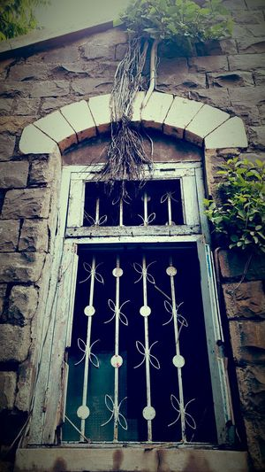 The EyeEm Collection Window Old House Tree Growing On Building