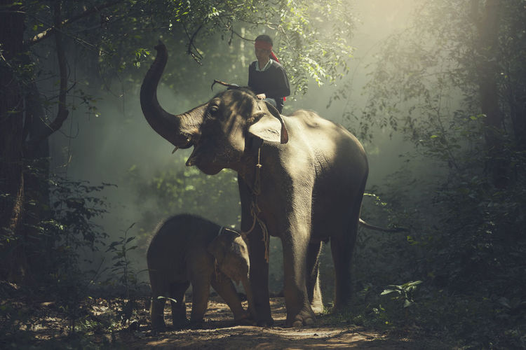 Young man riding on elephant at forest