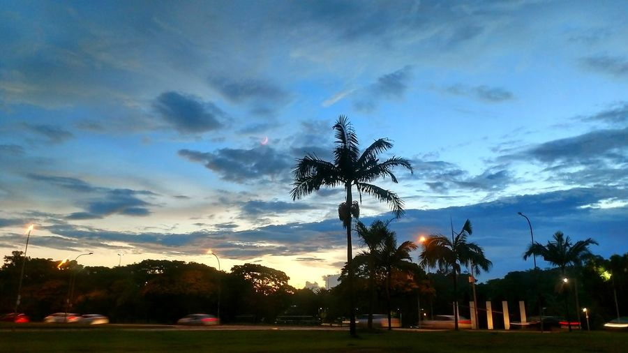 Sao Paulo - Brazil Sunset Tree Palm Tree Landscape Cityscape Cloud - Sky No People Outdoors Uniqueness Lifestyle Summer My City Ibirapuerapark Walking Around Freedom Enjoyment Streetphotography Streetview Sky Lights Cloud Brazil Blue Silhouettes Of A City