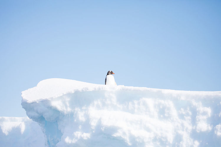 Low angle view of penguin on ice berg against sky