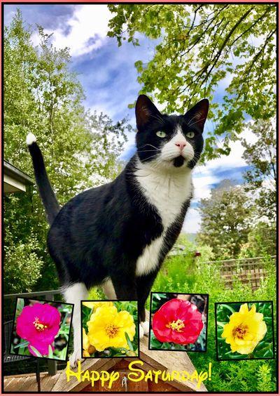 Happy Saturday everyone 🙂🍃🐱💐 Haveagoodweekend HappySaturday Goodvibes One Animal Flowers Feline Cat HelloEyeEm 🐱💐🌺