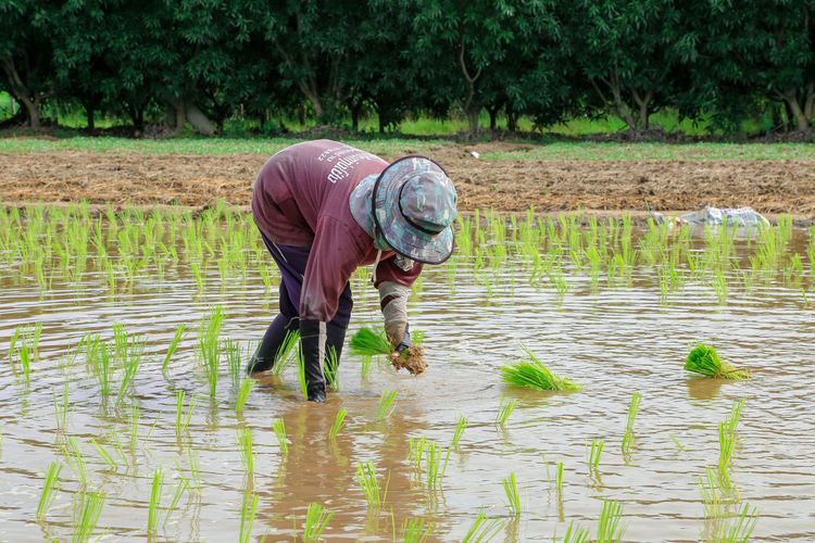 Man working in puddle at farm