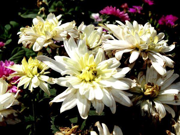 12daysofeyeem 6days Flowers,Plants & Garden Loveit♥ 12 Days Of EyeEm