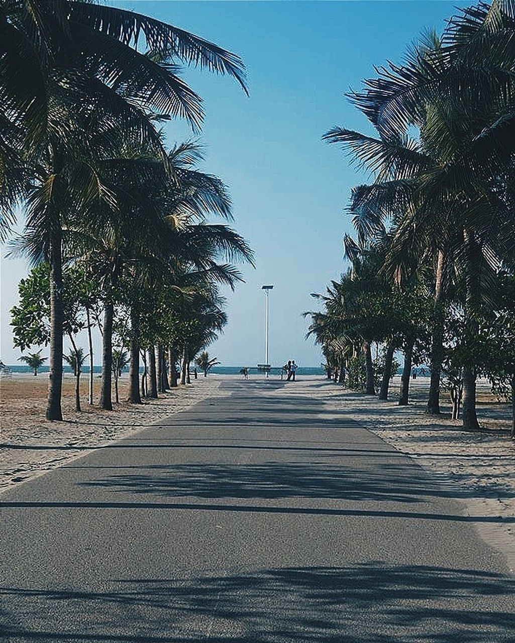 palm tree, tree, the way forward, road, outdoors, street, clear sky, beach, sky, transportation, day, no people, shadow, blue, scenics, nature, sea, beauty in nature, water