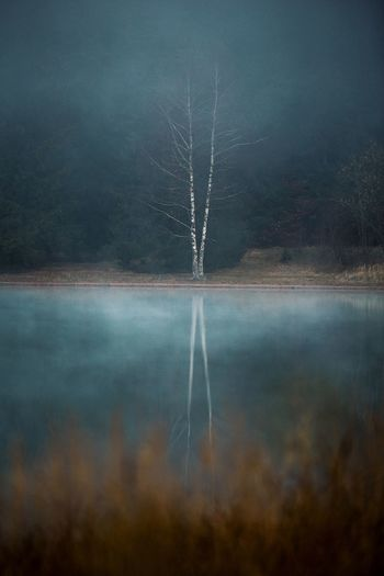 Tree Tranquility Plant Tranquil Scene Beauty In Nature Nature Water Fog Lake No People Reflection Scenics - Nature Non-urban Scene Forest Day Land Idyllic Sky Vapor Trail Hazy  Minimalism Minimalist Tree Mirror Mirror Reflection Capture Tomorrow