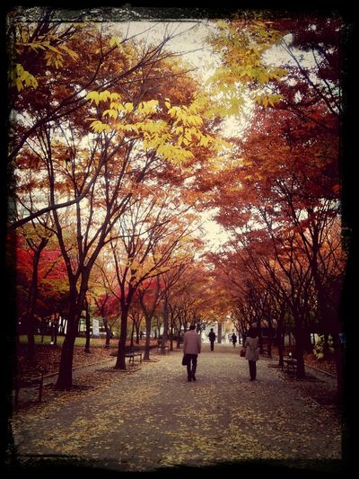 가을이닷...^^; Autumn Colors Mapleleaf Colors Of Autumn