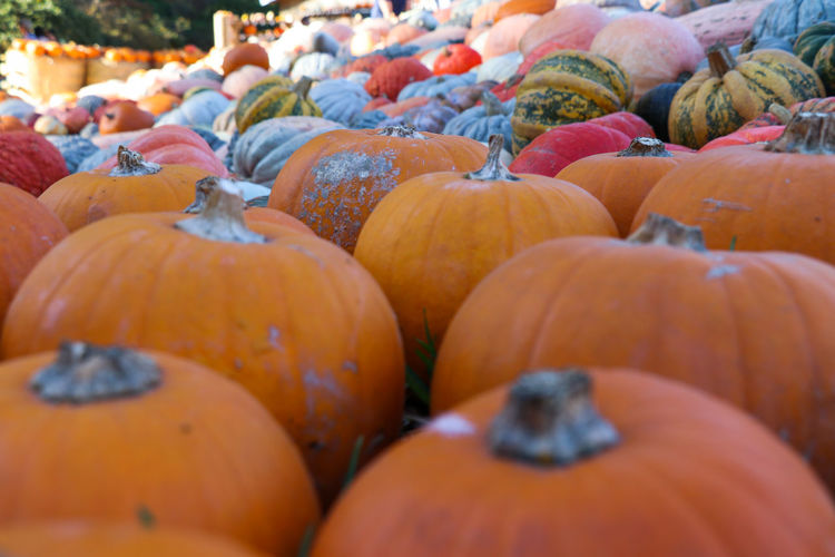 More pumpkins Food And Drink Food Pumpkin Healthy Eating Freshness Vegetable Large Group Of Objects Wellbeing Orange Color Abundance Retail  Market Choice Fruit Day No People Market Stall Focus On Foreground Autumn Close-up Ripe Outdoors Farmer's Market Retail Display Vegetarian Food