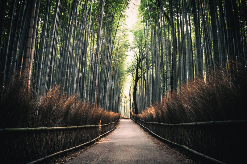 Empty road in bamboo forest