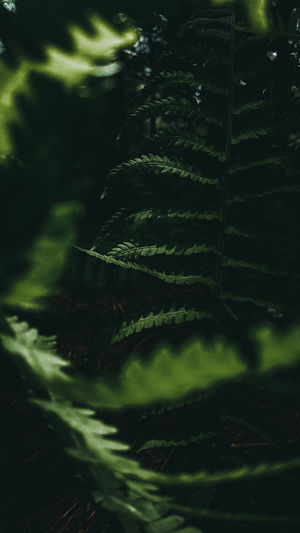 Buried In Green Green Color Plant Growth Selective Focus Close-up Leaf Fern Nature Plant Part No People Beauty In Nature Day Land Outdoors Tranquility Fragility Forest Tree Freshness Vulnerability  Coniferous Tree Deep Green Vegetation Mood Dark