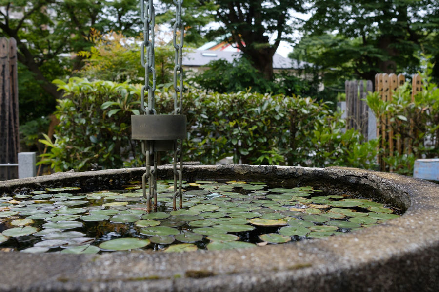 FUJIFILM X-T2 Japan Japan Photography Matsudo Temples Fujifilm Fujifilm_xseries Temple X-t2 善照寺 松戸