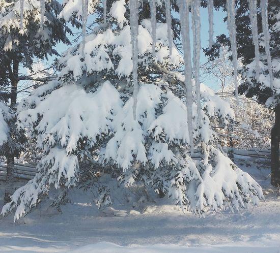 Whiteness Taking Photos Winter Wonderland Winter Trees