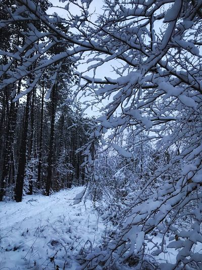 Tranquility Polar Climate Day Freshness Outdoors Branch WoodLand Tranquil Scene Landscape Sky No People Scenics