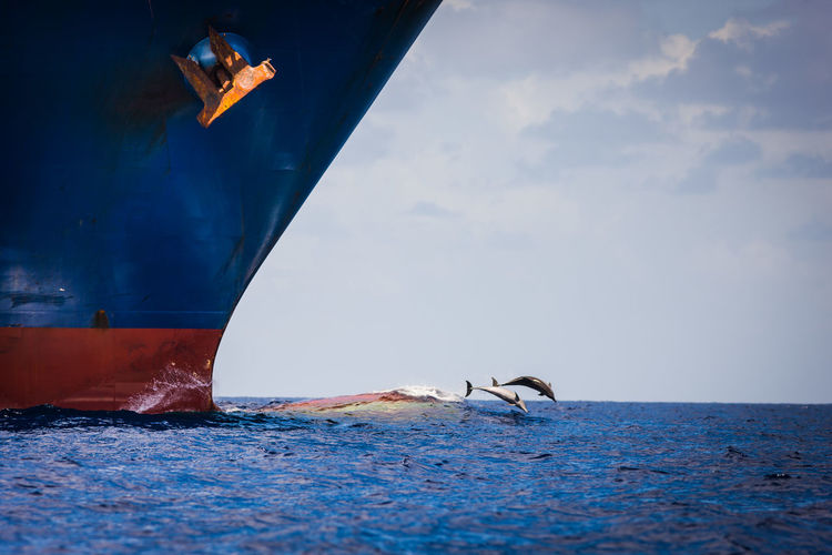 Fish diving in sea with ship in foreground
